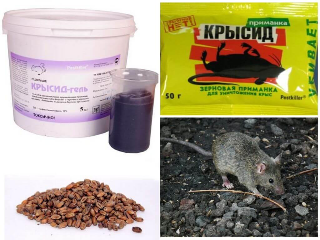 Отравление у собак, яды и противоядия