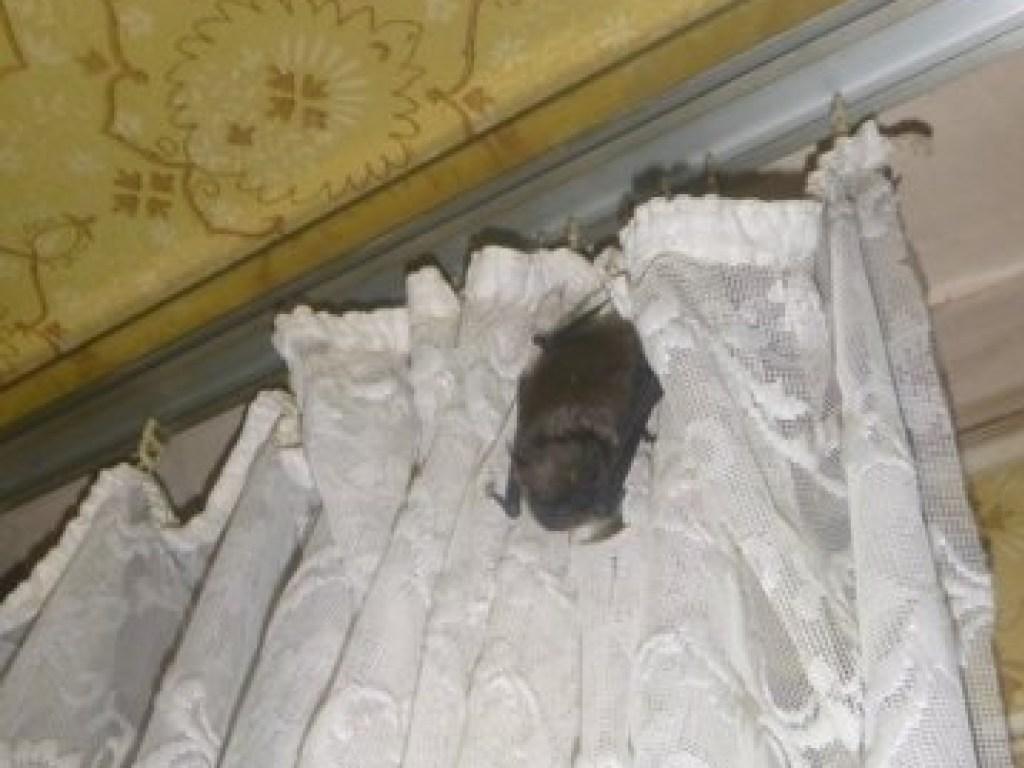 Как избавиться от мышей в квартире навсегда - как избавиться от летучей мыши