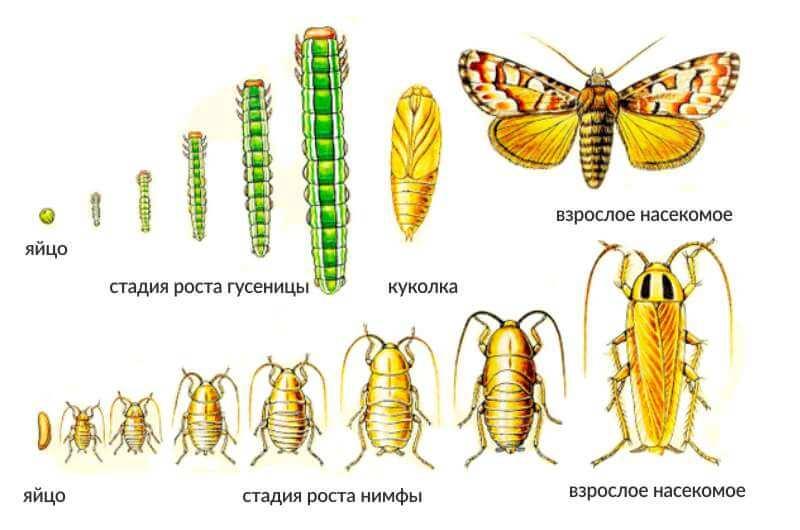 Моль: разновидности, как избавиться от насекомого
