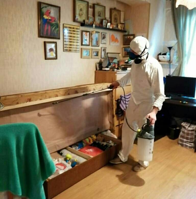 Профилактические меры от клопов в квартире