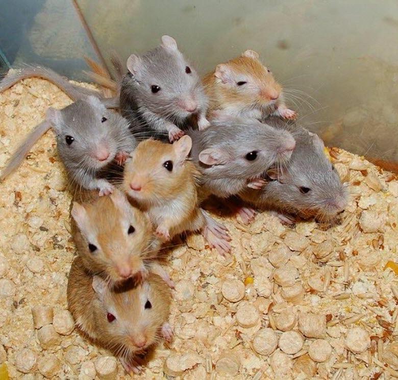 Сколько живут мыши: оптимальные условия содержания 2021