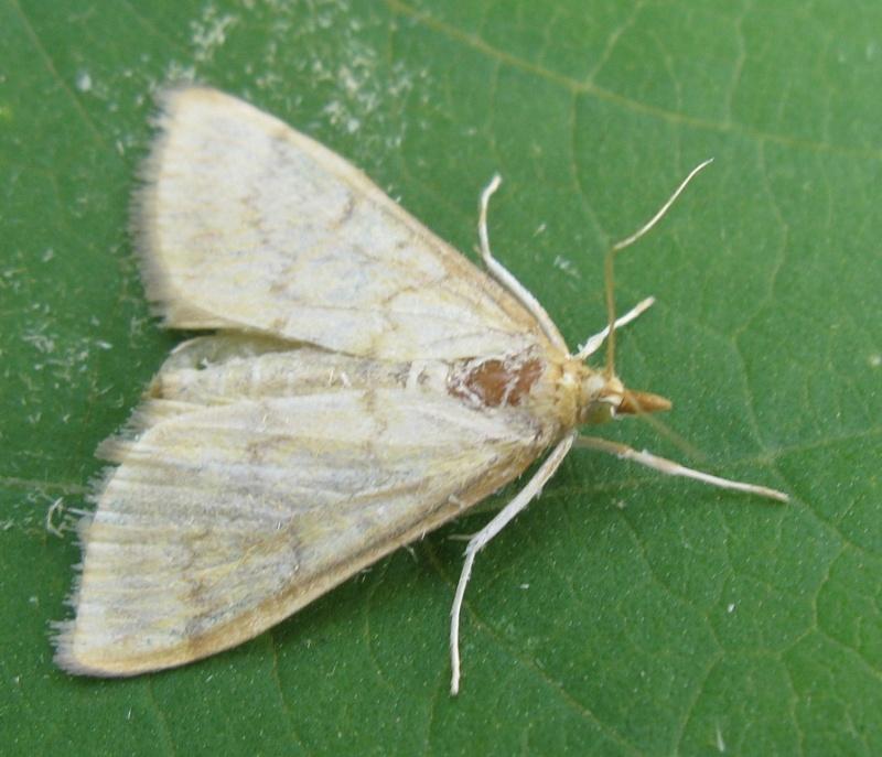Чем травить гусениц на капусте: эффективные народные средства от вредителей