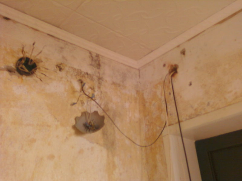 Может ли мышь прогрызть натяжной потолок
