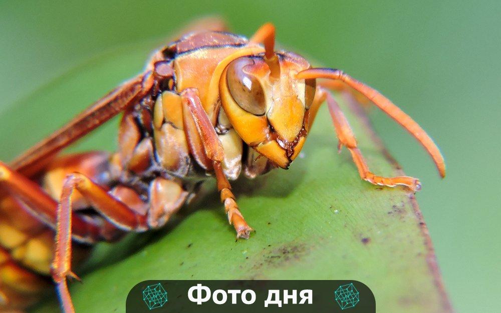 Опасный враг в полоску: аллергия на укус осы