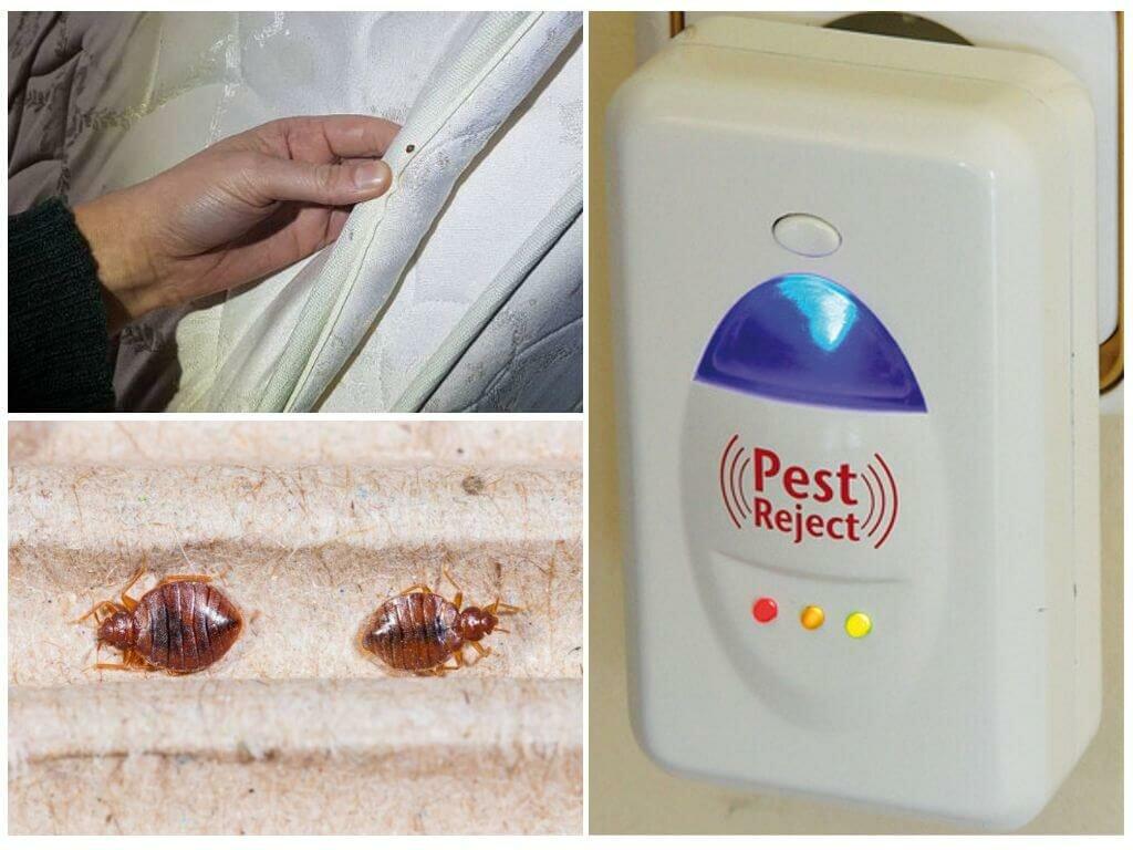 Ультразвуковой отпугиватель клопов: отзывы, применение и эффективность / как избавится от насекомых в квартире