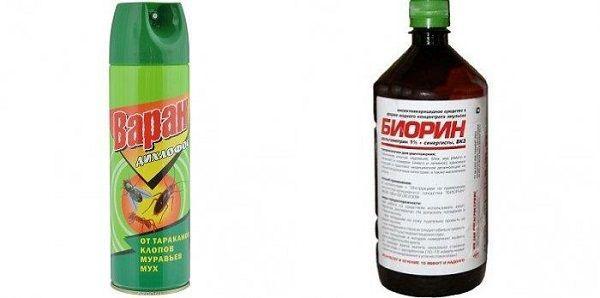Как быстро вывести земляных блох из дома: химические средства и народные методы