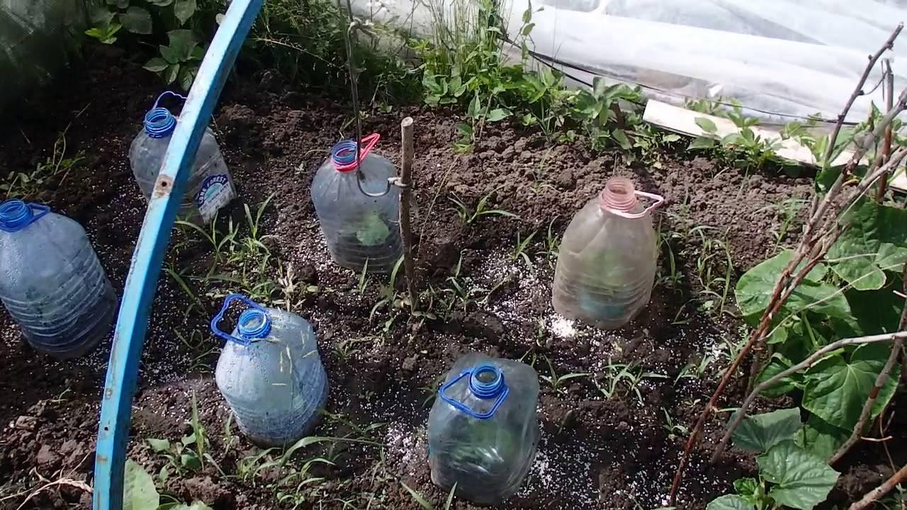 Избавление от гусениц в теплице эффективные методы