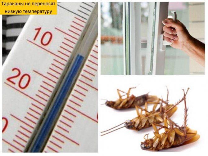 При какой температуре умирают тараканы и их личинки