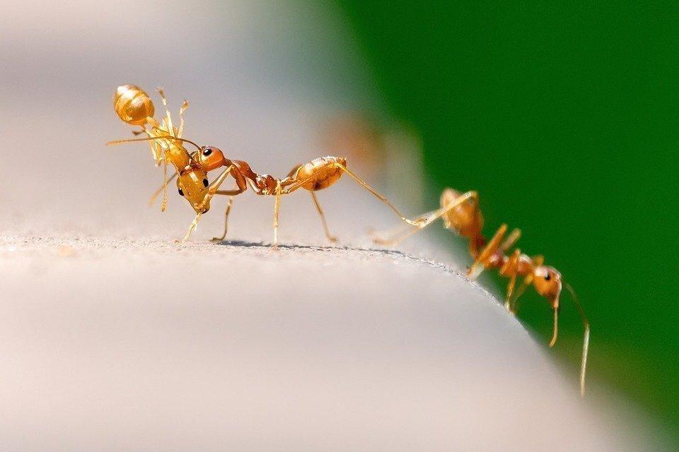 """Толкование сна """"к чему снятся муравьи?"""""""