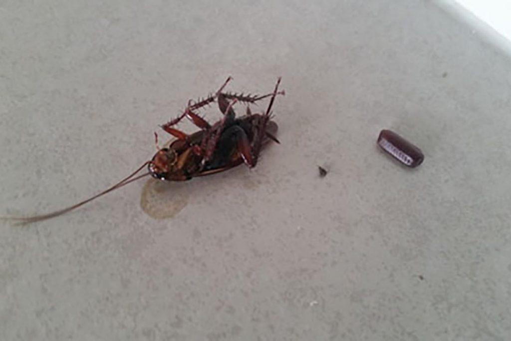 Что едят тараканы: чем питаются в квартире без еды, любимая еда паразитов