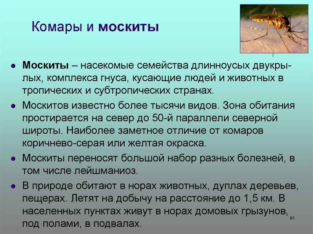 Опасные насекомые: берегись комара и москита! | давайте мечтать вместе!