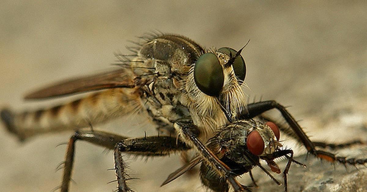 Почему человеку так трудно убить муху, а мухе-убийце - запросто.