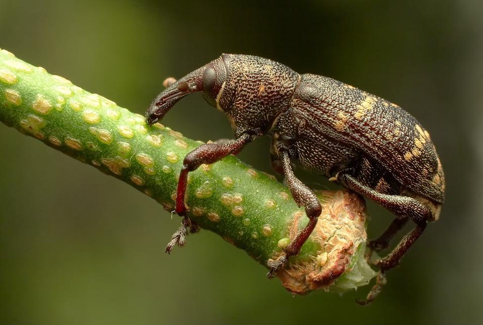 Полезные животные в саду: насекомые. | russianpermaculture.ru