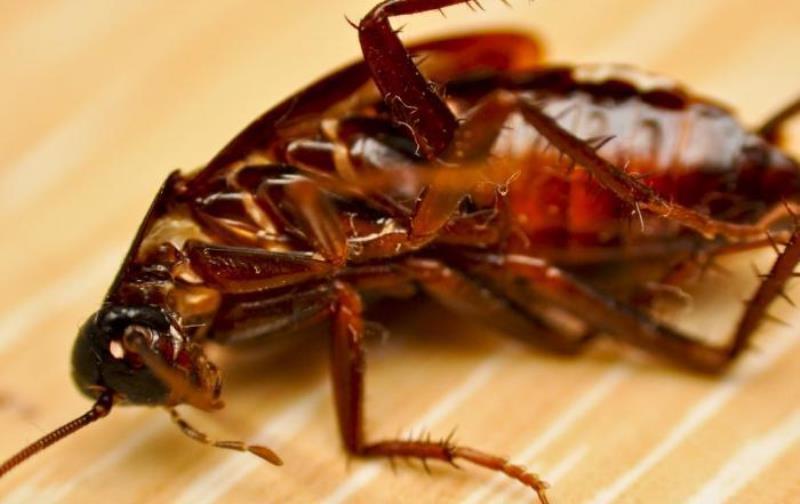 К чему снятся тараканы много и живые - толкование