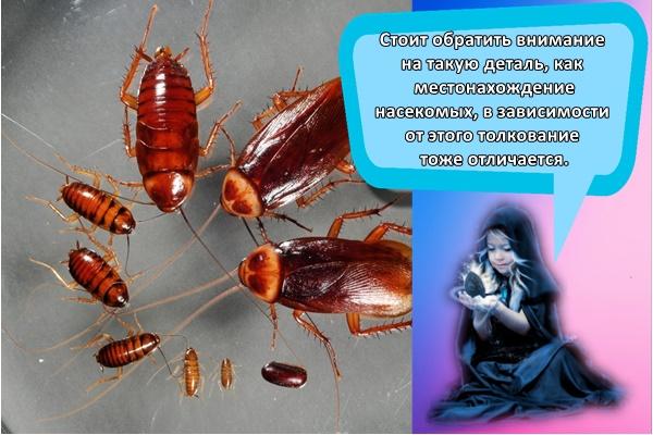 К чему снятся тараканы женщине? сонник тараканы во сне