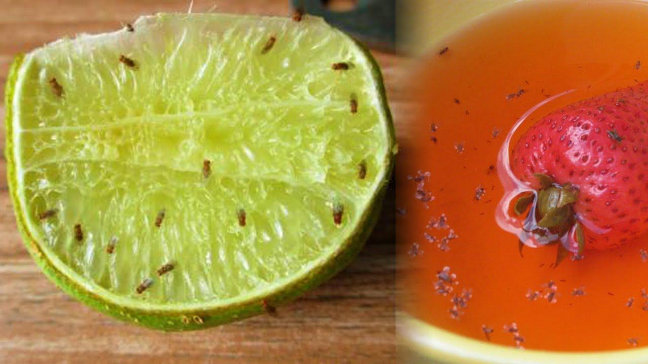 Откуда берутся «плодовые мошки» и как избавиться от этих надоедливых насекомых