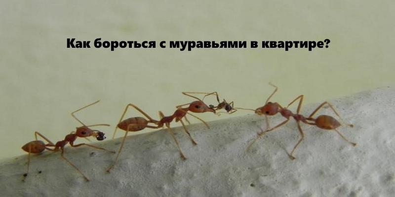 Как избавиться от рыжих муравьев в доме - самое эффективное средство