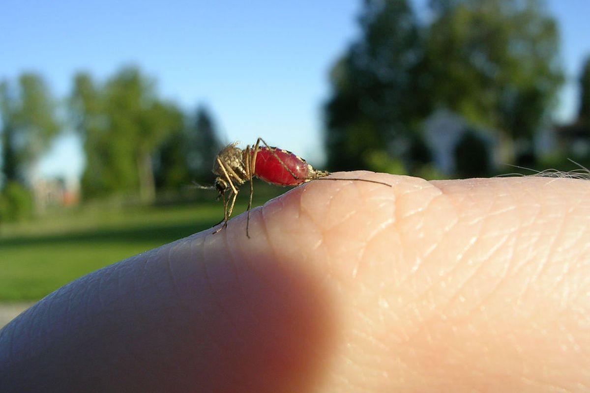 Почему комары кусают не всех: популярные теории