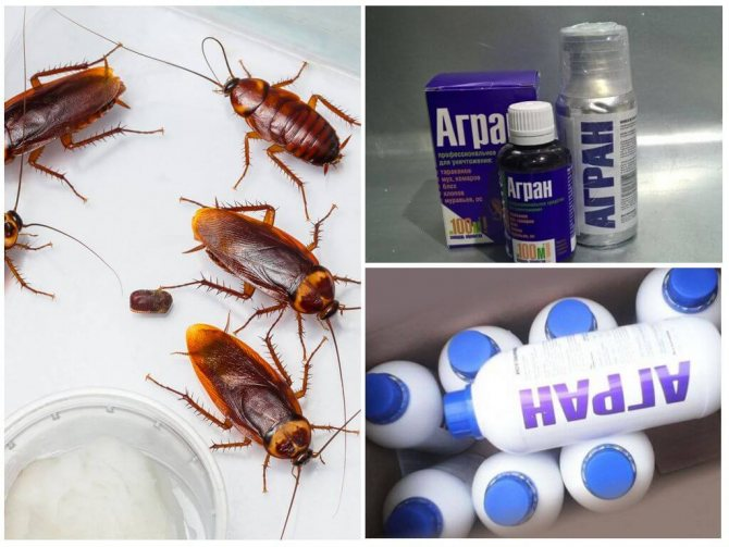 Средство Агран от тараканов: отзывы, инструкция по применению