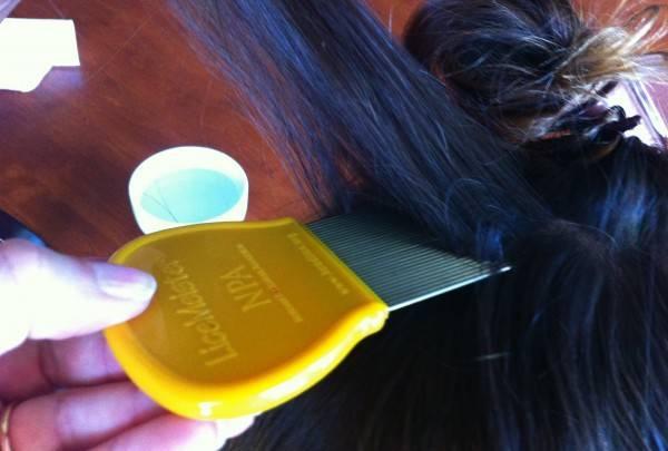 Заводятся ли вши на окрашенных волосах