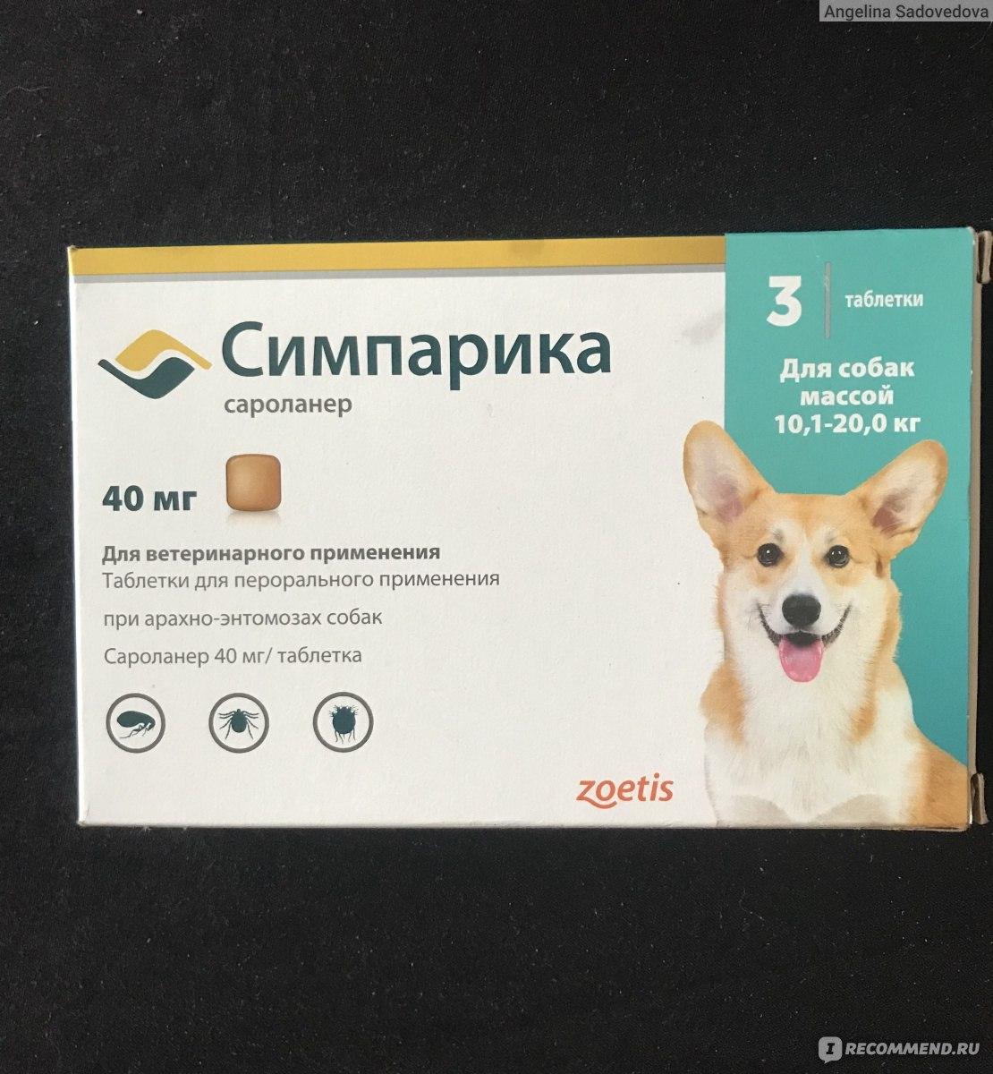 Прививка от клещей для собак: как и когда ее делают