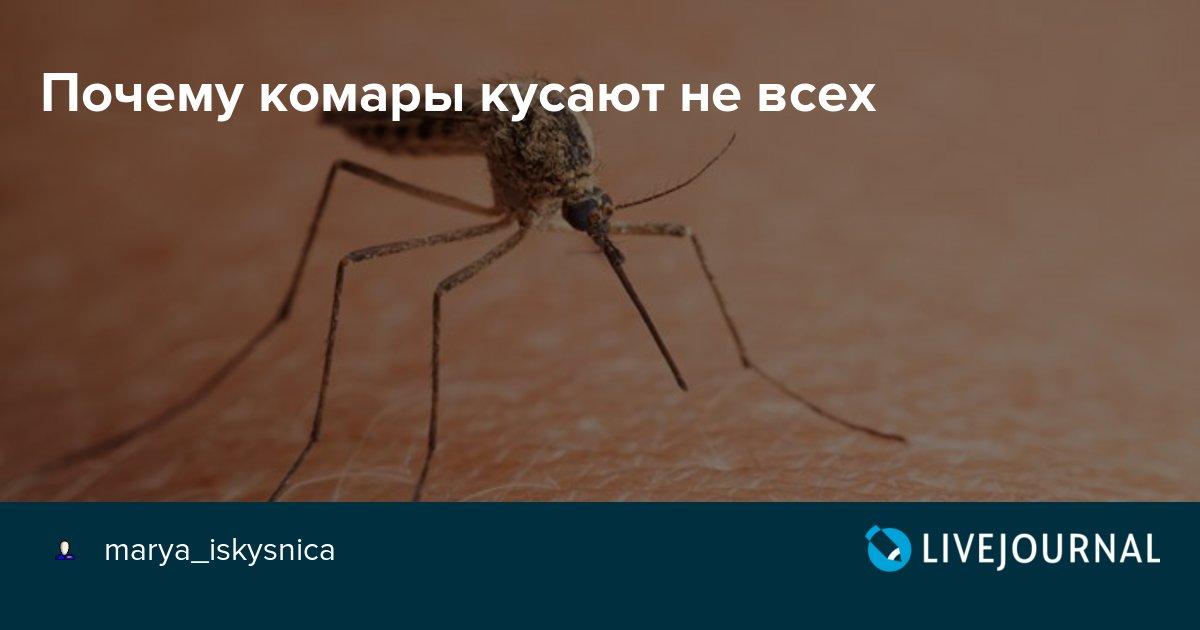 Комариные укусы: как выглядят, в чем опасность, как лечить? узнай все признаки, как отличить укус комара и других кровососов от клопа