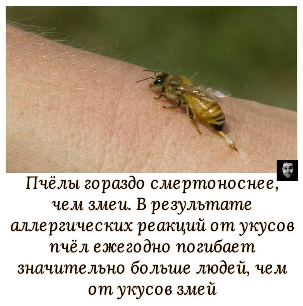 Возможные последствия укуса осы