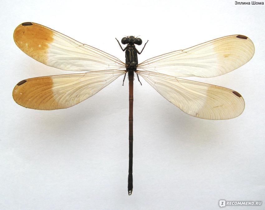 Тараканы: могут ли они летать?