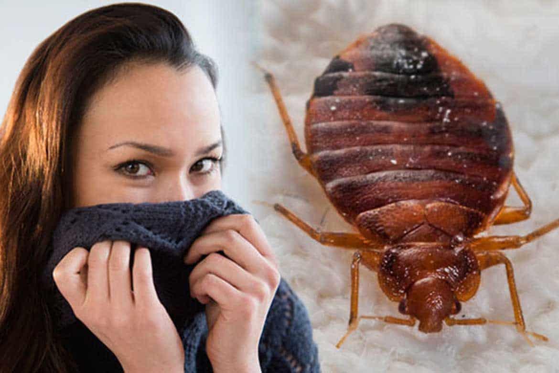 Какой запах отпугивает мух - читайте!