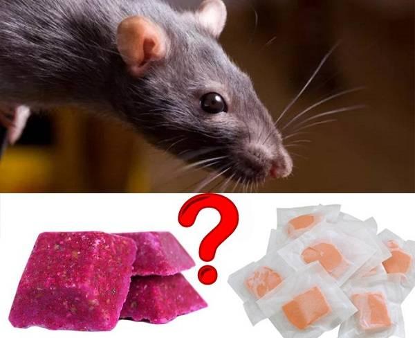Клей для крыс и мышей, а также против других грызунов: нюансы ловли и отзывы о применении