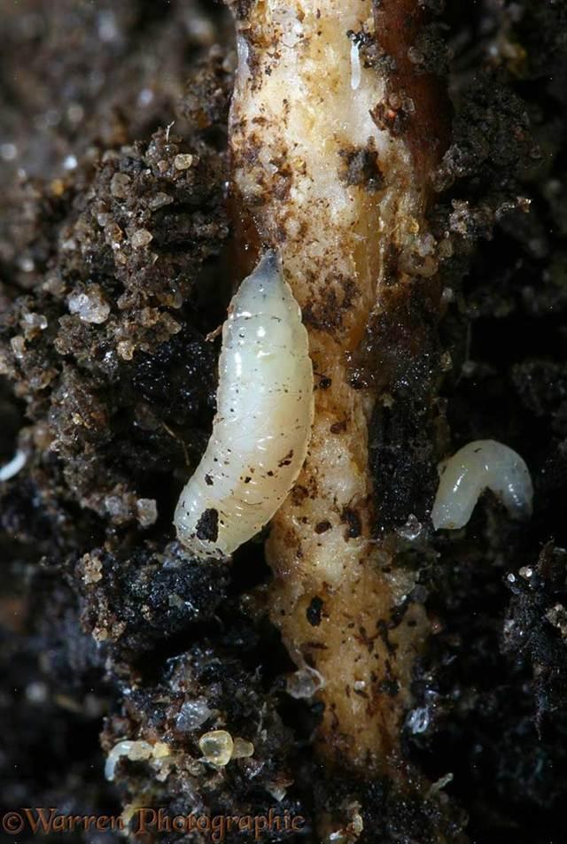 Избавляемся от личинок мух и насекомых с помощью кипятка