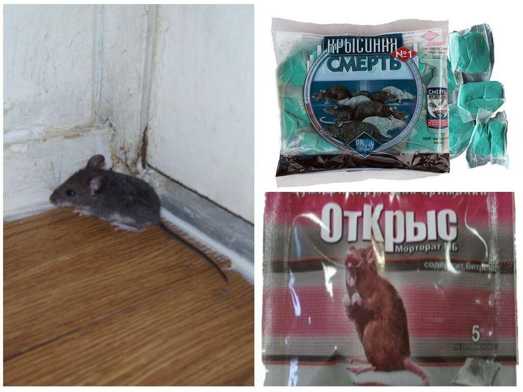 Самый лучший способ, как избавиться от мышей в дачном доме навсегда