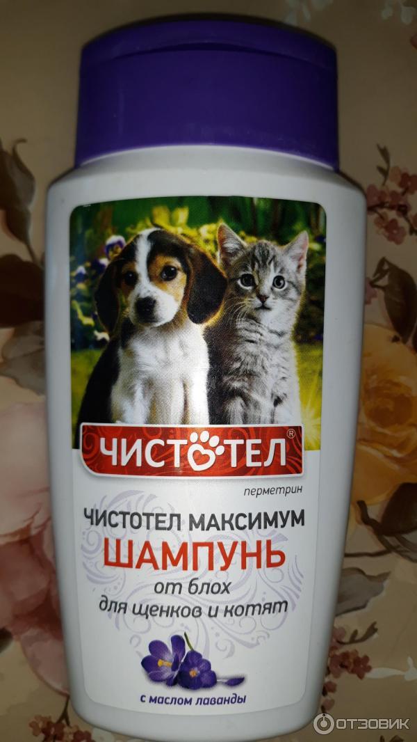 Выбираем шампунь от блох для котят и кошек