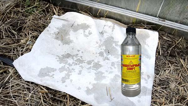 Нашатырный спирт спасет от муравьев на даче!