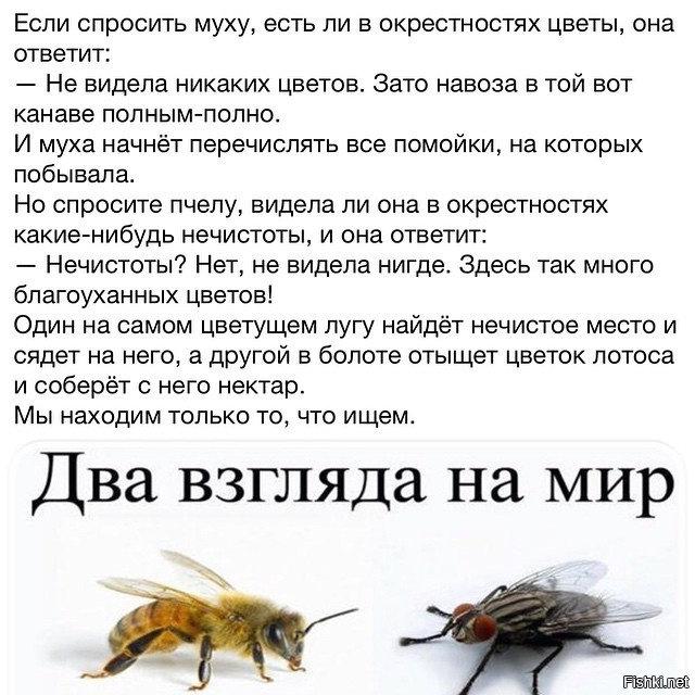 Почему муха потирает передними лапками. почему муха потирает лапки