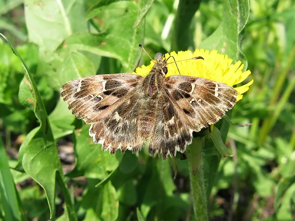 Порхающие бабочки, грызущие гусеницы | дачный сезон