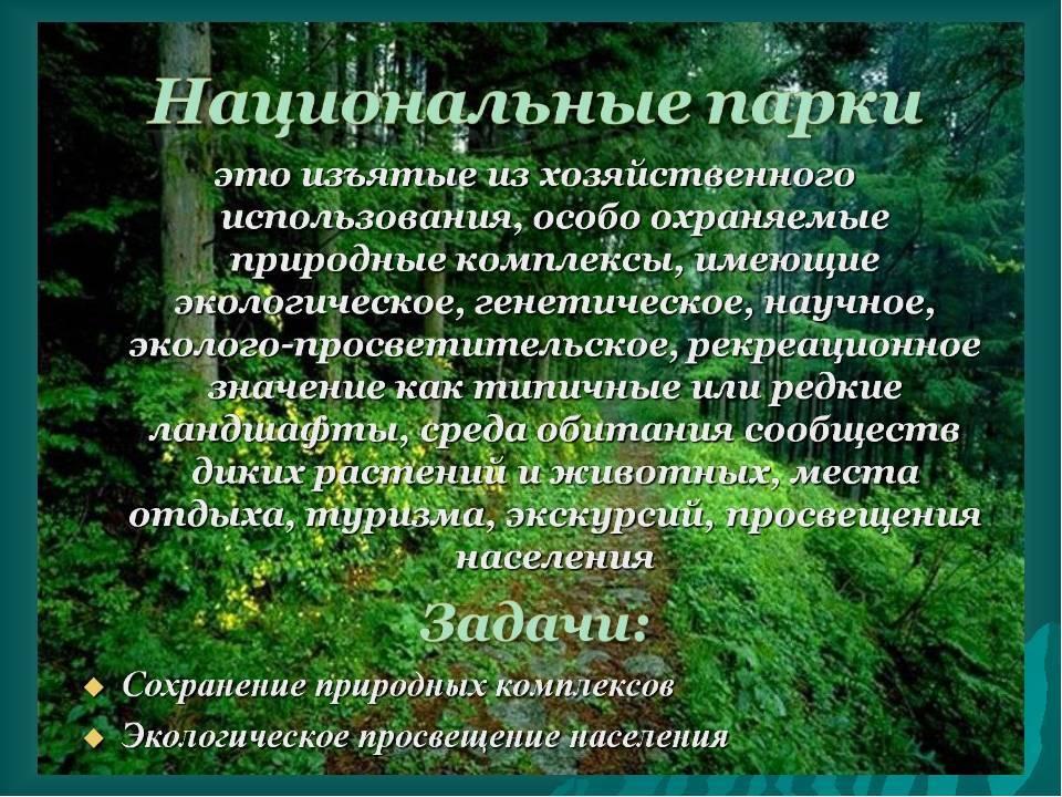Бембекс носатый википедия