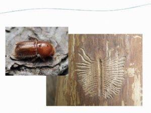 Как избавиться от жука-короеда: как определить, чем опасен, методы профилактики, обзор 5 лучших инсектицидов, их плюсы и минусы