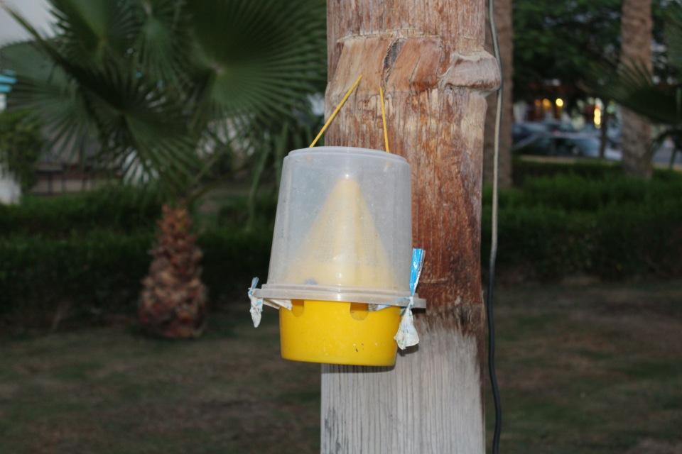 Ловушки для мух