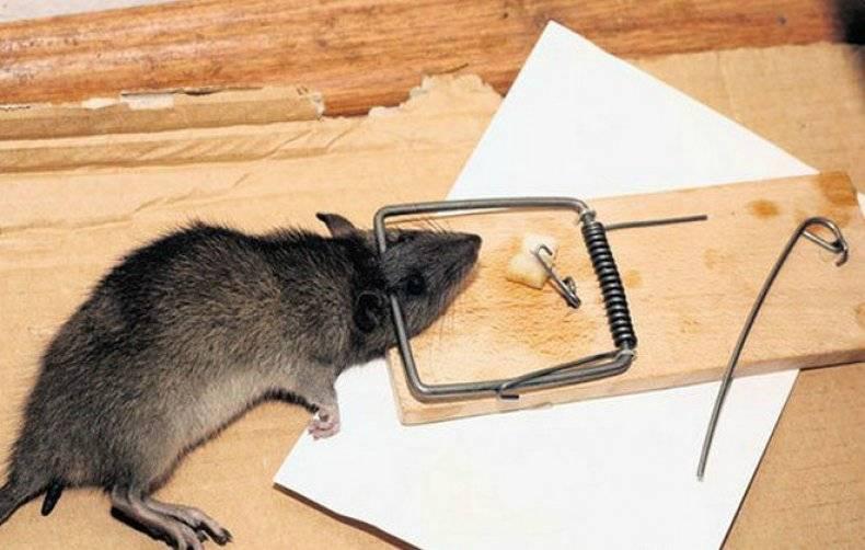 Как надежно избавиться от крыс и мышей в своем частном доме