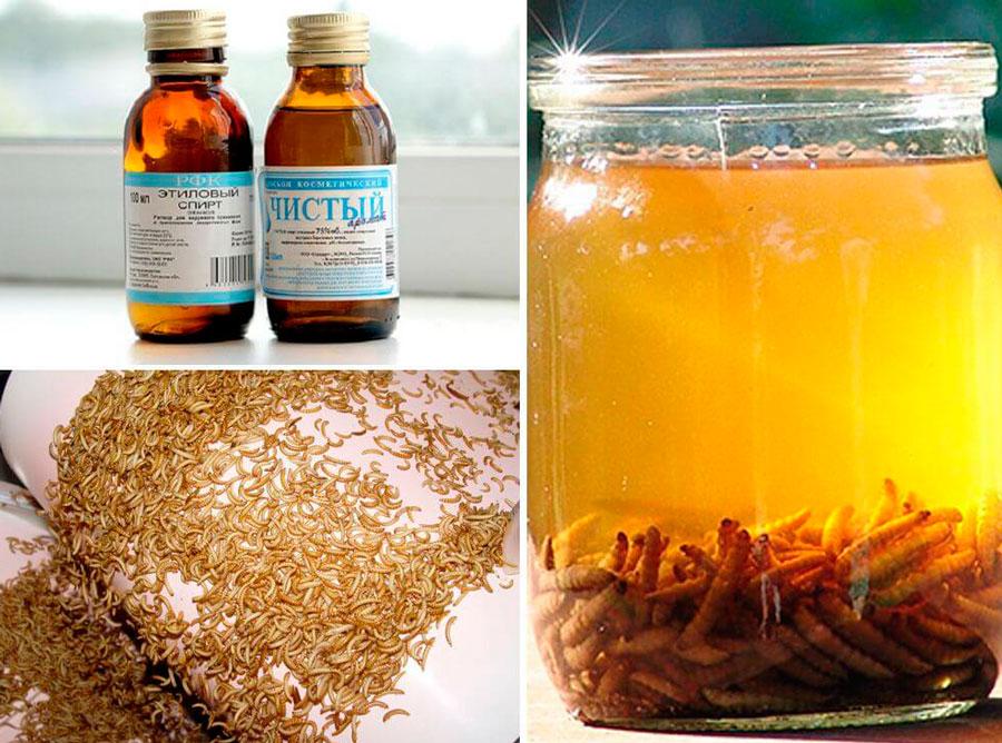 Применение пчелиной моли в лечебных целях
