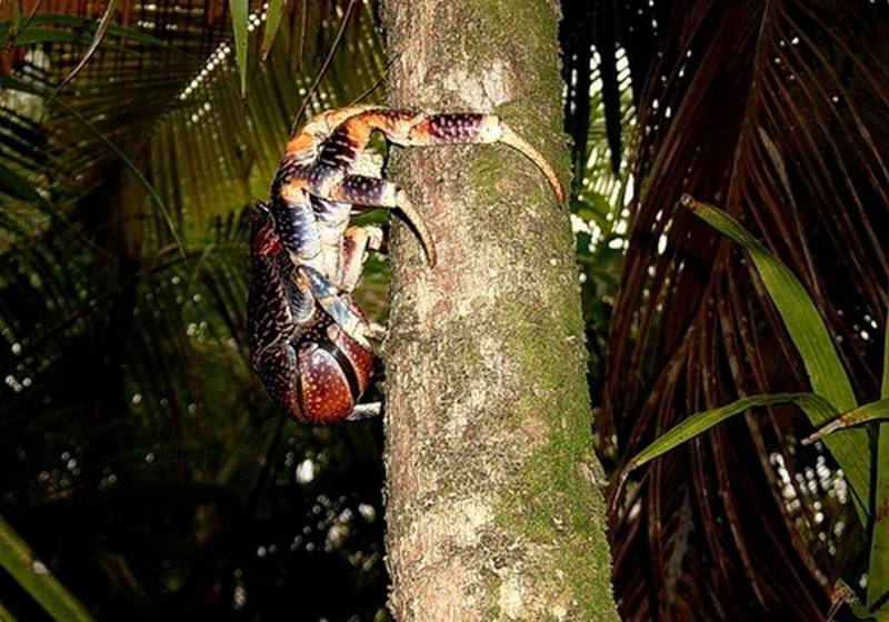Мексиканский таракан – фото, образ жизни и содержание