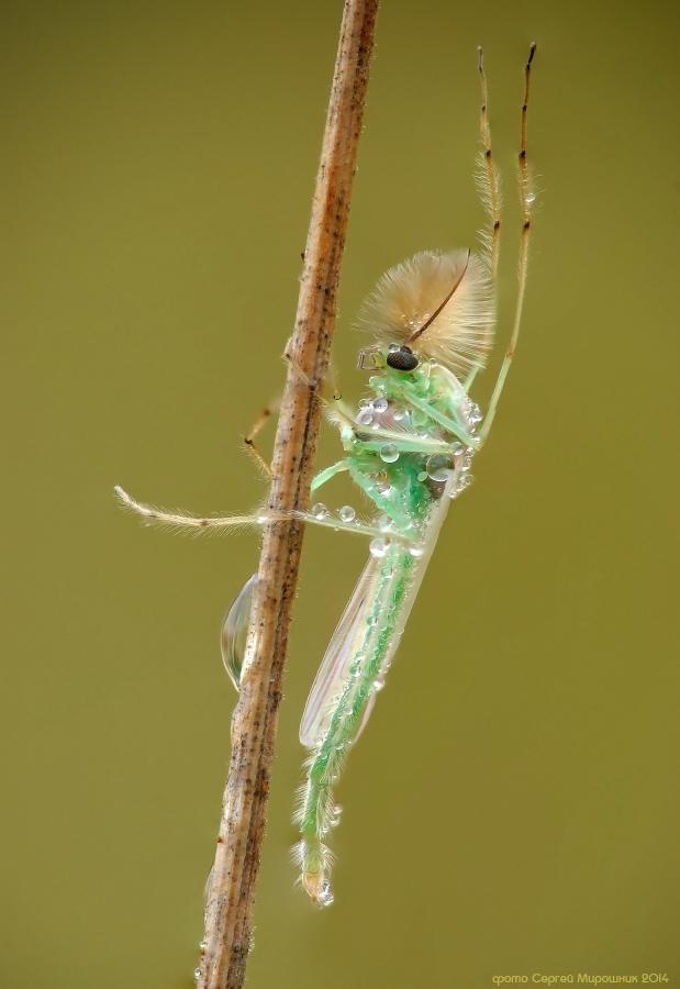 Зеленый комар подпортил курорту имидж