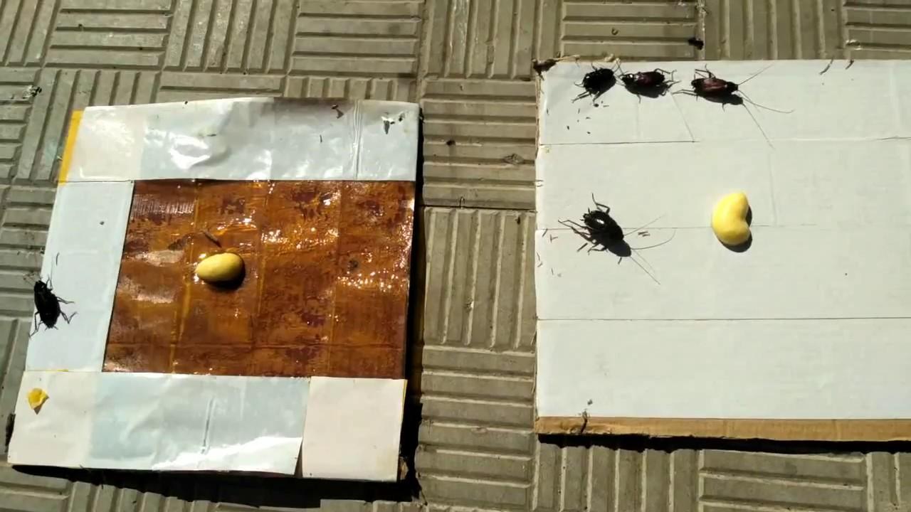 Чем оттереть клей от скотча с пластика, одежды, стекла и мебели: обзор способов