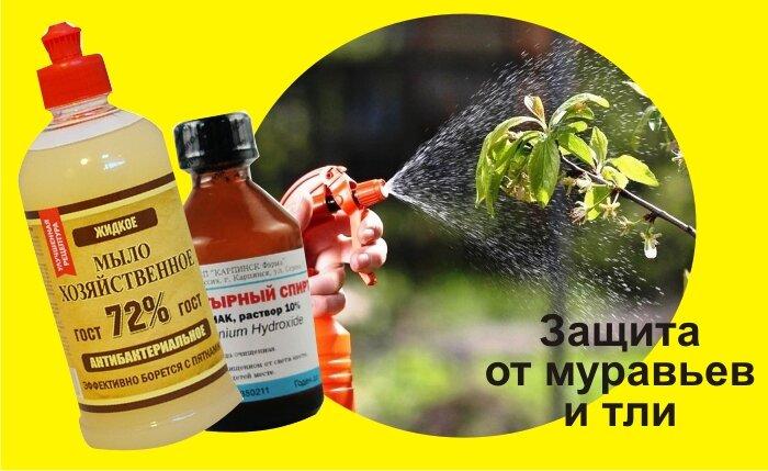 Обработка нашатырным спиртом огорода от муравьев