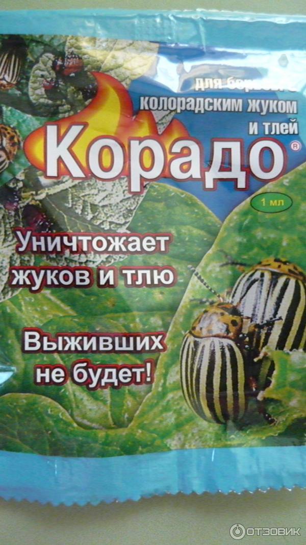 """Как применять """"корадо"""" для борьбы с колорадским жуком и тлей"""