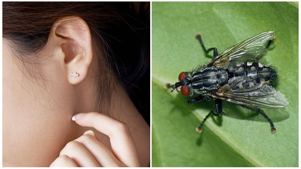 Если комар залетел в ухо - что делать, как вытащить в домашних условиях, что будет