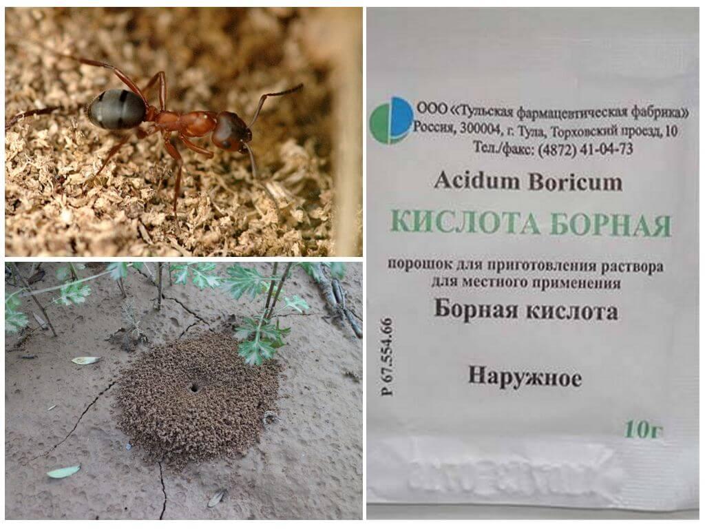 Борная кислота от муравьев: рецепты с яйцом, медом, сахаром