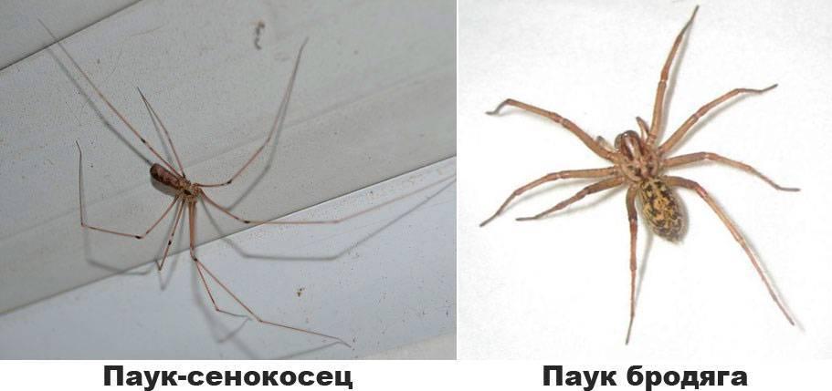 Как избавиться от пауков, не убивая их - wikihow