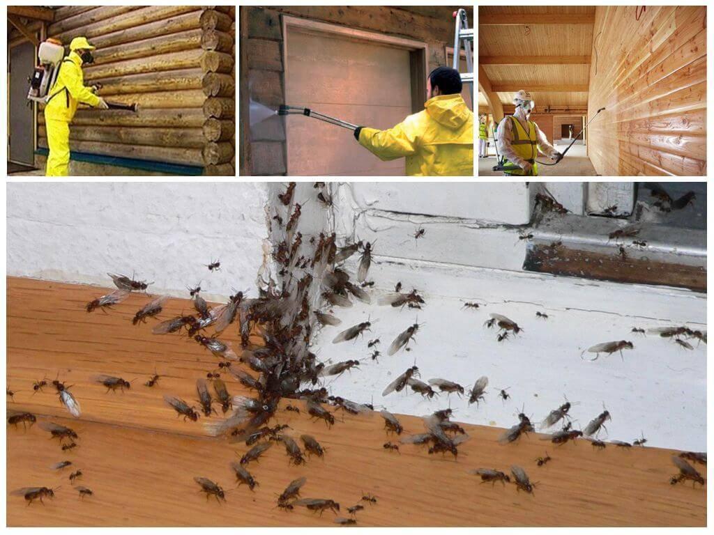 Рыжие муравьи в квартире: как избавиться, народные средства